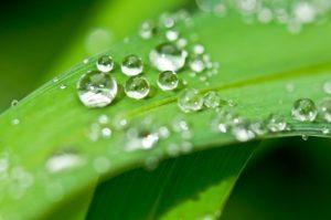 drip, dew, dewdrop